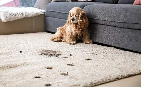 carpet cleaning we are located in the austin texas area so when you shop with us youu0027re supporting your community